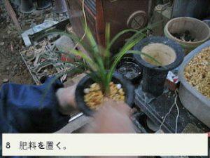 8.肥料を置く